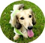 Cookie P1020263.jpg